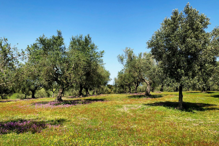 Arti Olivenöl Ab Hof Kalender